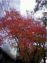 堂島 紅葉.jpg