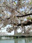 桜ノ宮.jpg