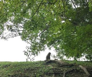 城下の木の下で佇む猫 - コピー.jpg