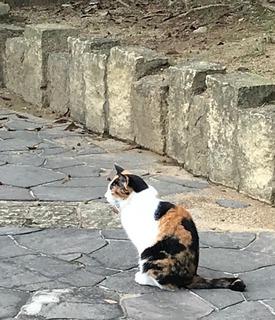 猫パト1 - コピー.jpg