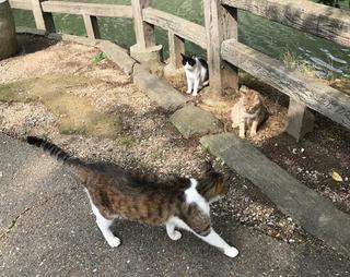 猫パト2 - コピー.jpg