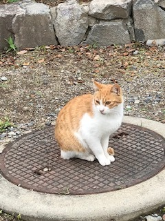猫p 茶 - コピー.jpg