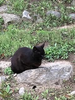 猫P クロ - コピー.jpg