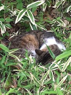 猫P トラ - コピー.jpg