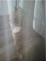 窓辺のa.jpg